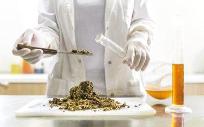 Rencontrez le THCP et le CBDP: une étude révèle l'identification de deux nouveaux cannabinoïdes