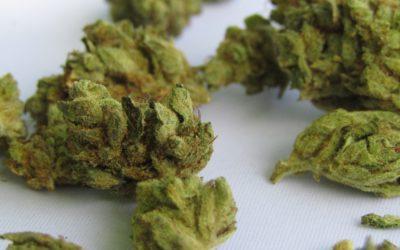 Le gouvernement luxembourgeois étudie un plan de légalisation de la marijuana récréative