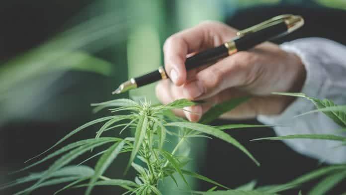 Formation dans le secteur du cannabis : une prise en charge pour les étudiants